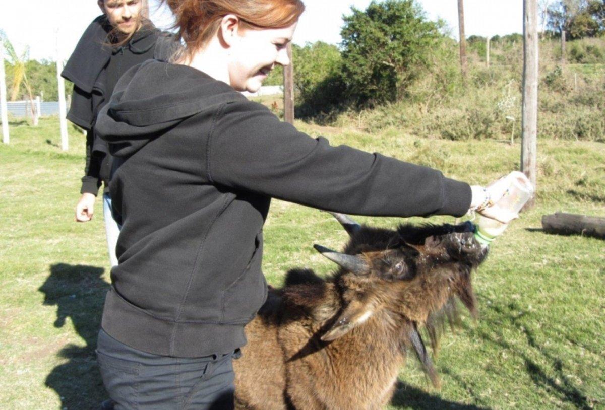 Veterinary Internship in South Africa