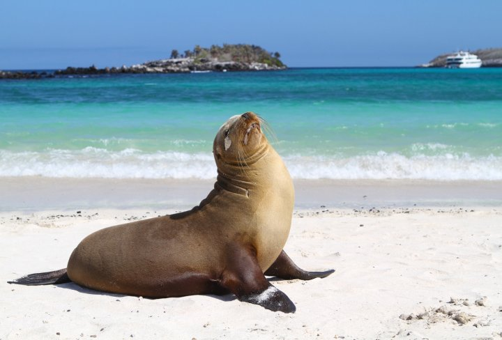 Sea Lions on Sante Fe Islands