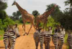 Iconic African wildlife on Kruger safari for volunteers