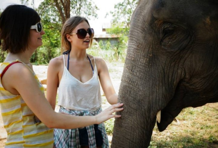 Elephant village in Surin, Thailand